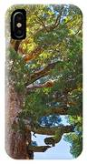 Grizzly Giant Sequoia Top In Mariposa Grove In Yosemite National Park-california    IPhone Case