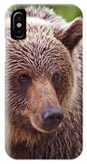 Grizzly Portrait IPhone Case