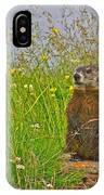 Groundhog At Point Amour In Labrador IPhone Case