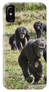 group of Common Chimpanzees running IPhone Case