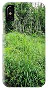 Hairy Brome (bromus Ramosus) IPhone Case