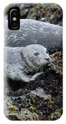 Harbor Seal Pup Resting IPhone Case