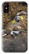 Harbor Seals IPhone Case