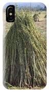 Harvested Sesame Crop IPhone Case