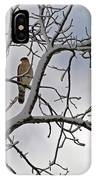 Hawk In Winter IPhone Case