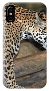 Here Kitty Kitty IPhone Case