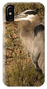 Heron Basking In The Morning Sun IPhone Case