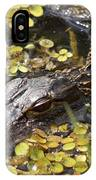 Hiding Alligator IPhone Case