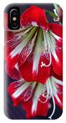 Hippeastrum IPhone Case