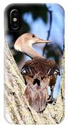 Hooded Merganser Duck IPhone Case