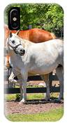 Horse Family IPhone Case