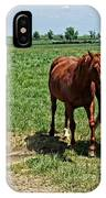Horses In The Pasture IPhone Case