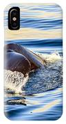 Humpback Whale IPhone Case