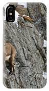 Ibex Pictures 183 IPhone Case