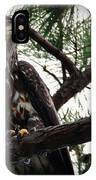 Immature American Bald Eagle IPhone Case