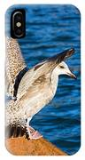Immature Herring Gull At The Harbour IPhone Case