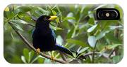 Immature Yucatan Jay IPhone Case