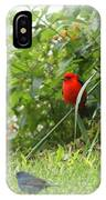 Indigo Bunting And Scarlet Tanager 2 IPhone Case