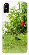 Indigo Bunting And Scarlet Tanager IPhone Case