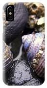 Iridescent Purple Seashells IPhone Case