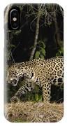Jaguar Cuiaba River Brazil IPhone Case