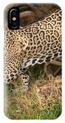 Jaguar Panthera Onca Foraging IPhone Case