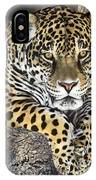 Jaguar Portrait Wildlife Rescue IPhone Case by Dave Welling