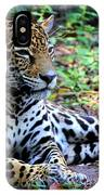 Jaguar Resting From Play IPhone Case