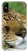 Jaguar Resting IPhone Case
