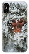 Japanese Macaque Covered In Snow Japan IPhone Case