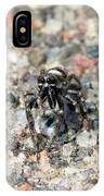 Jumping Spider Face On IPhone Case