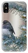 Junco In Pine IPhone Case