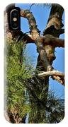 Just A Tangle Of Pine Tree Branches IPhone Case