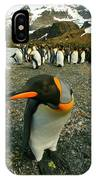 Juvenile King Penguin IPhone Case