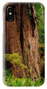 Kevin And The Big Tree - Redwood National Forest IPhone Case