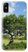 Kigelia Pinnata Tree IPhone Case