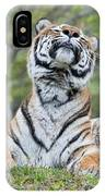 Kitty Kitty. IPhone Case
