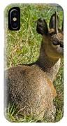 Klipspringer Antelope IPhone Case