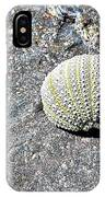 Lacy Shell On A Beachrock IPhone Case