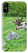 Large Reindeer Molting In Summer Pasture Art Prints IPhone Case