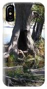 Large Tree Trunk IPhone Case