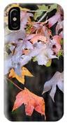Late Autumn Maples IPhone Case