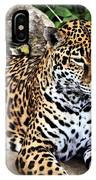 Leopard At Rest IPhone Case
