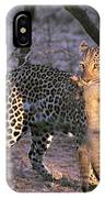 Leopard With African Wild Cat Kill IPhone Case