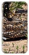 Lesser Nighthawk Chordeiles Acutipennis IPhone Case
