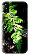 Light Play On Fern IPhone Case