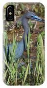 Little Blue Heron 3 IPhone Case