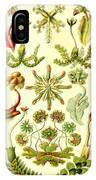 Liverworts Moss Brunnenlebermoos Haeckel Hepaticae IPhone Case