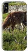 Llama Ya Mama IPhone Case