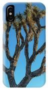 Low Angle View Of Joshua Tree, Joshua IPhone Case